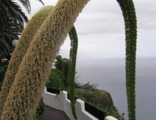 Tenerife January 2008